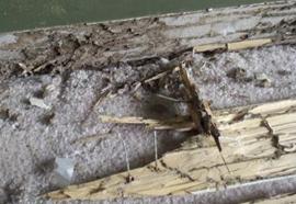 White ant damage .
