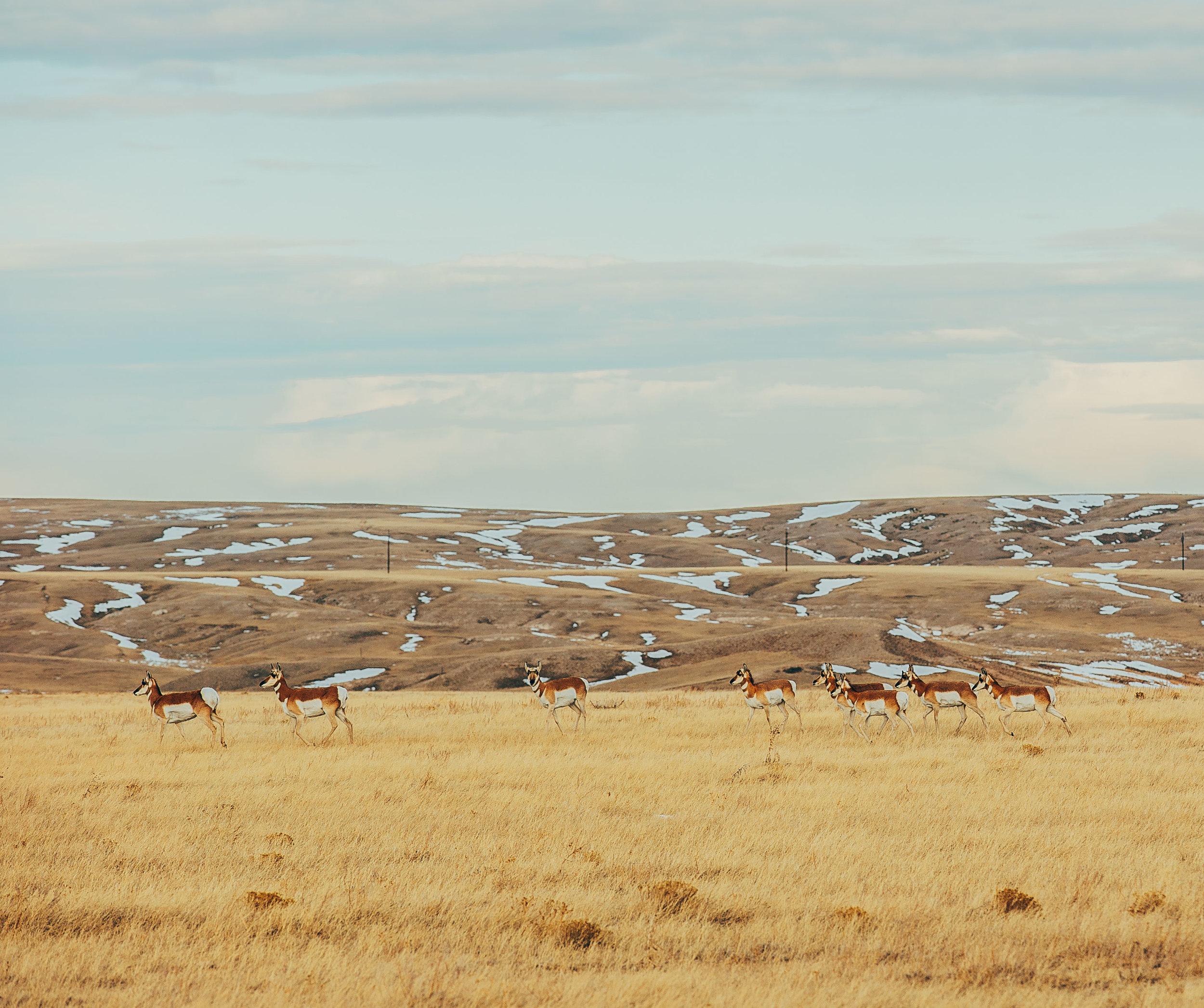 Antelope_Prarie2.jpg