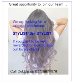 stylist advert.jpg