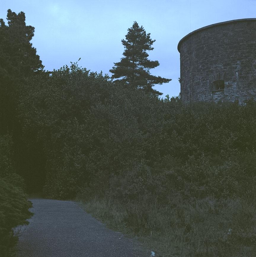 Garnish_Island_9.jpg