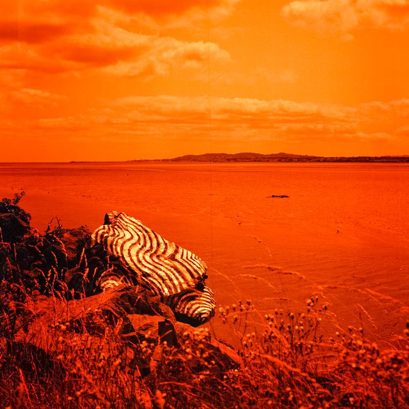 Camera: Hasselblad 500C/M  Film: Lomography Redscale XR 50-200  Location: Sandymount, Dublin, Ireland