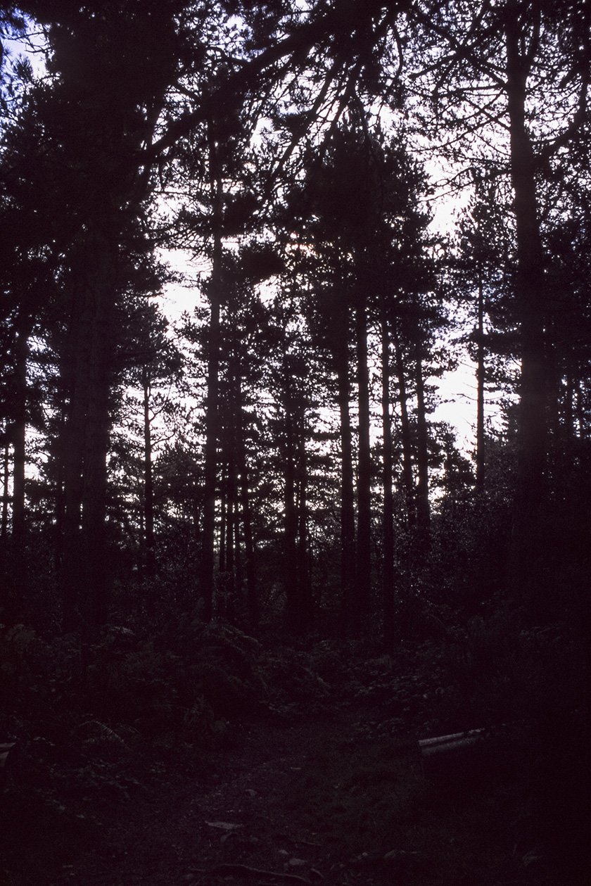 Kindlestown_Woods_1.jpg