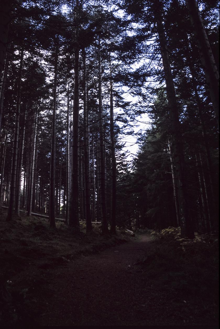 Kindlestown_Woods_4.jpg