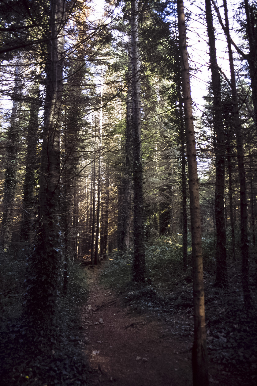 Kindlestown_Woods_6.jpg