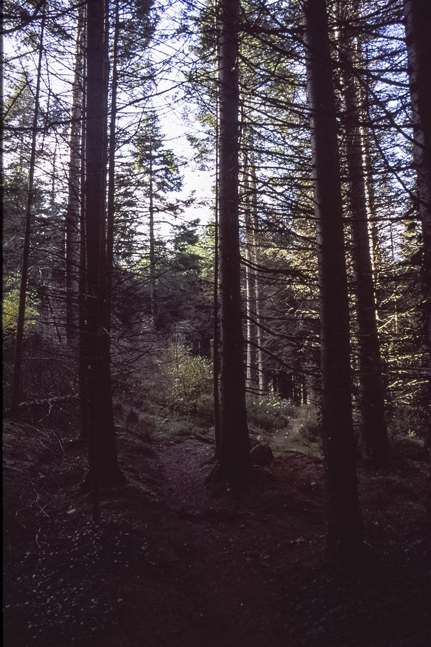 Kindlestown_Woods_7.jpg