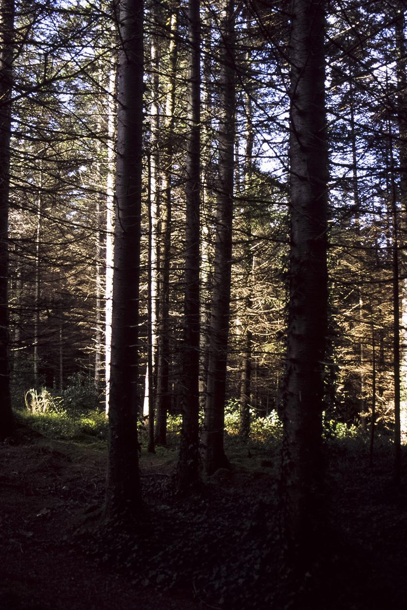 Kindlestown_Woods_8.jpg
