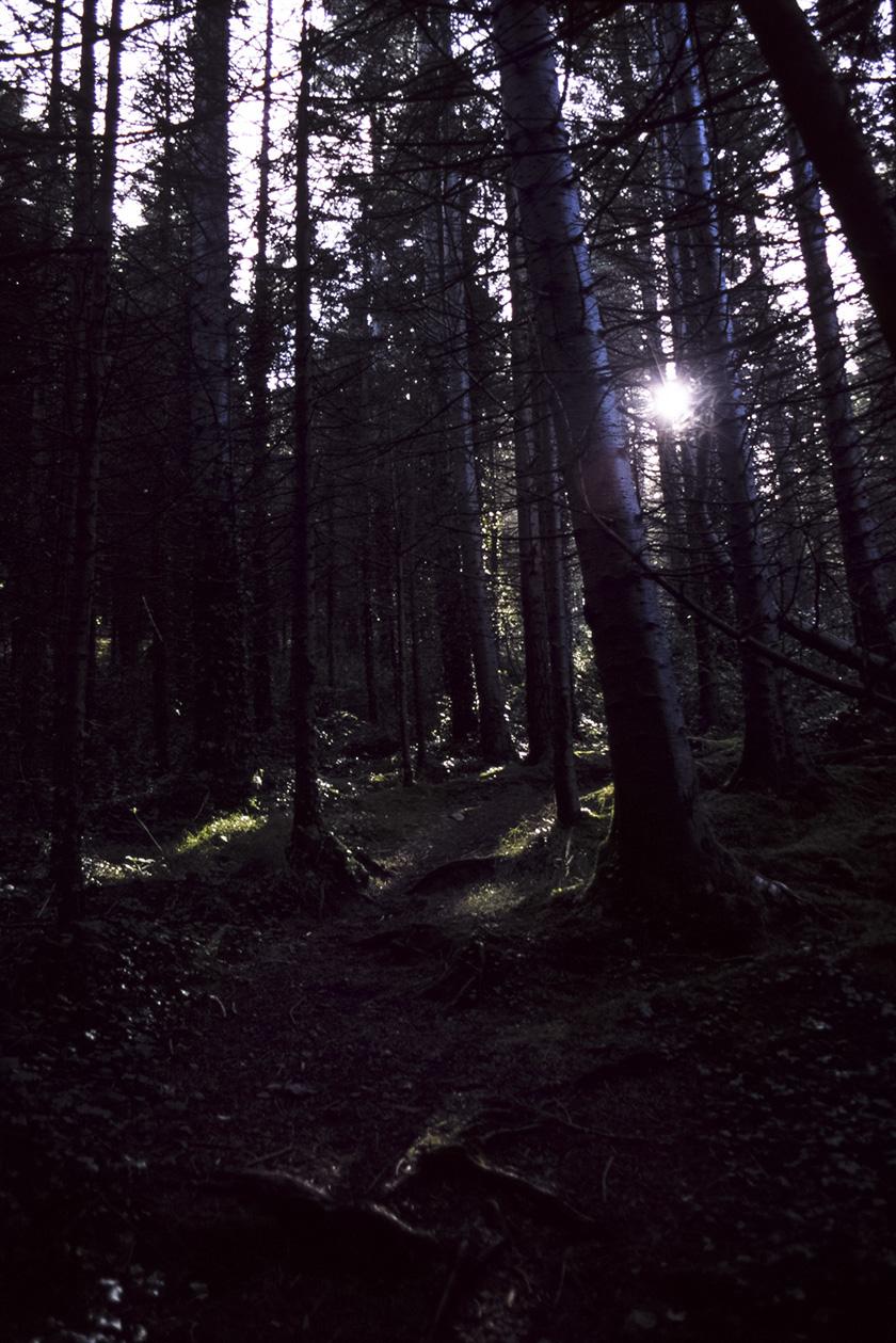 Kindlestown_Woods_9.jpg