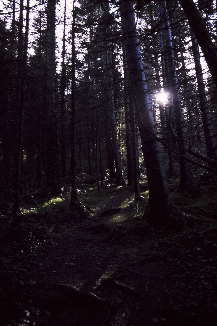 Film: Fuji Provia 100F  Camera: Canon EOS 300  Location: Kindlestown Wood, Delgany, Co Wicklow, Ireland