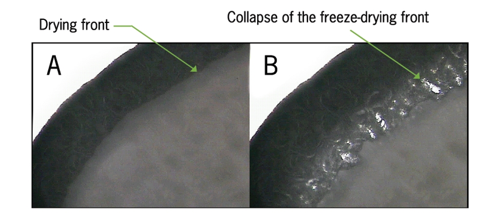 Herrera et al. figure 1,  freeze-drying of antivenoms