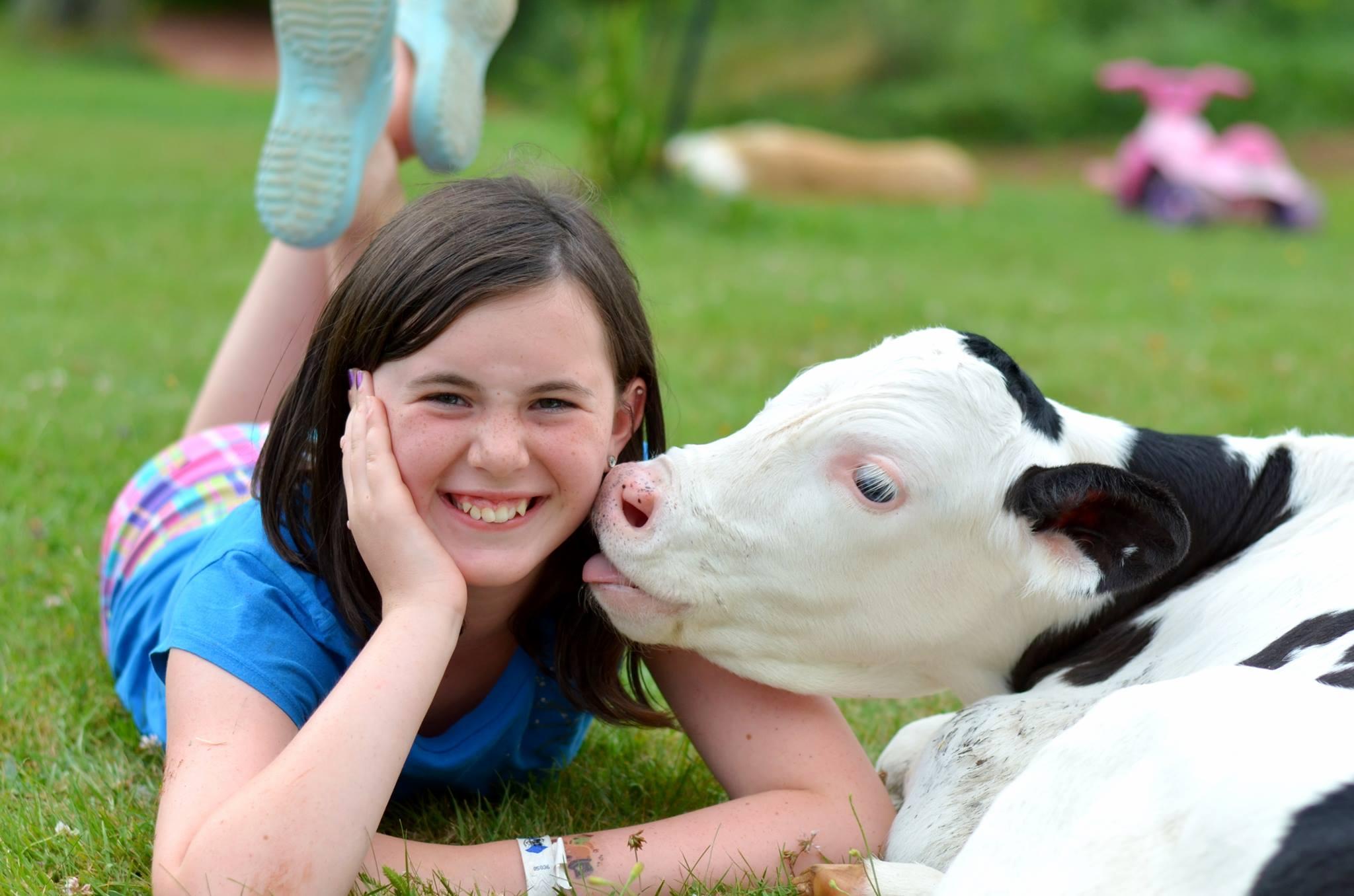 ADL cow kiss.jpg