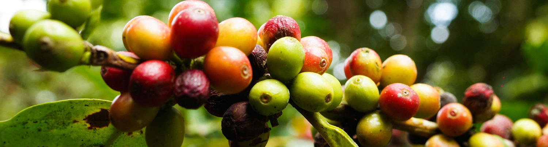 red-bean-coffee_8.jpg