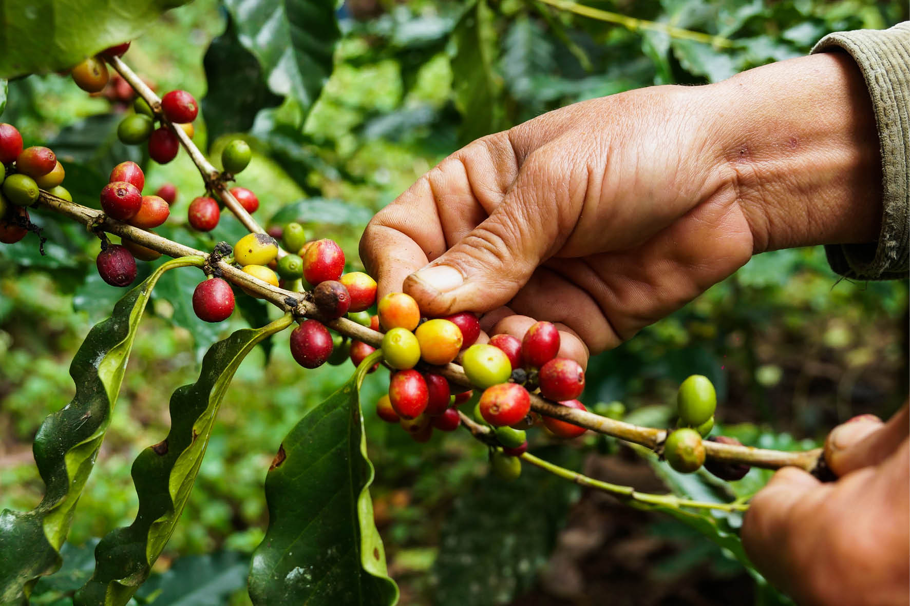 darwoods_coffee_4.jpg