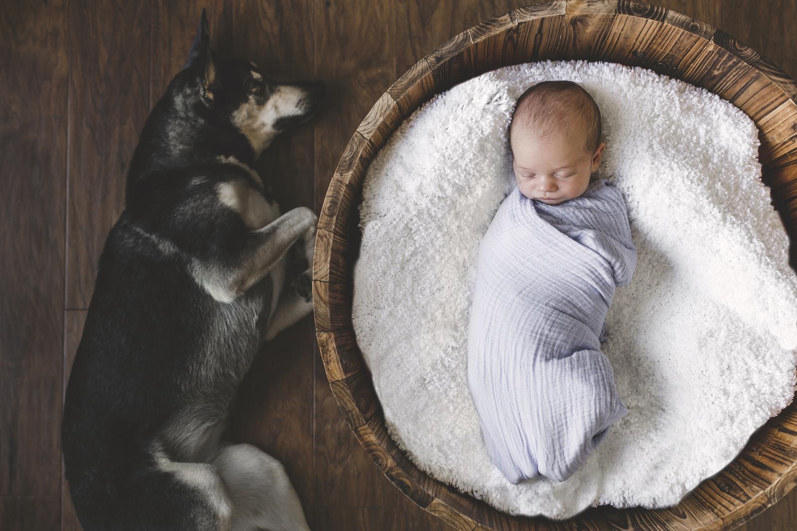 Adam-Szarmack-Newborn-Portrait-Dog.jpg