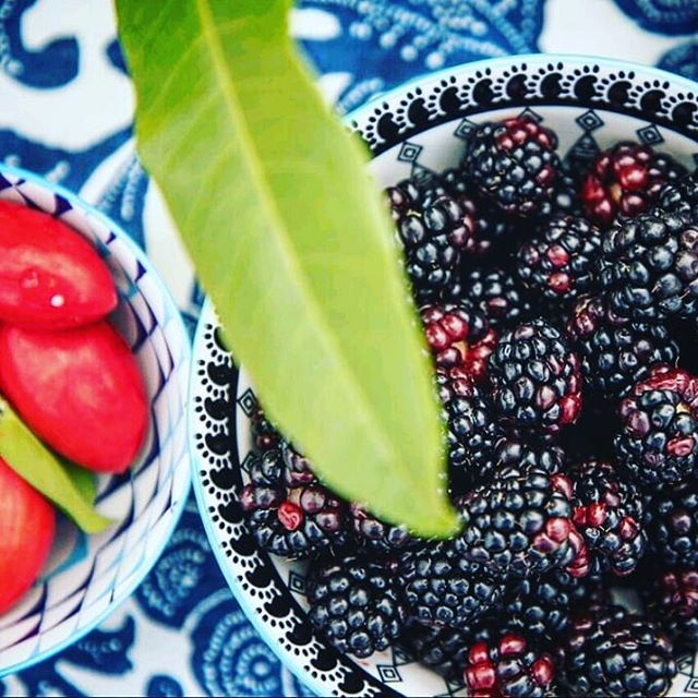 How amazing are these black berries and wild natal plums?? Now lets mash em', throw a touch of wild all spice leaf, add some rum and have a cocktail! ;) . . . . . . . #freshisbest #wildforaging #cocktailtime #freshfruit #mixologist #cocktails #blackberries #natalplum #twistedspoon #bermuda #ahhhbermuda #islandlife #comedrinkwithus #wildallspice #allspice #craftbar #craftcocktails #mobilebar #gotobermuda #goodvibesonly #weliketoparty #wildplants #wildbermuda