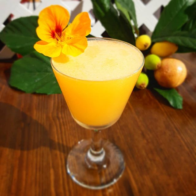 When the loquats are out we make cocktails! This is the: **BERMY DAIQUIRI** Goslings Amber Rum | Wild Loquats | Local Passion Fruit | Lime | Sugar| Wild Nasturtium garnish . . . . . . . #wildflowers #wildfruit #foragedcocktails #cocktailtime #cocktail #mixologist #mixology #bermuda #bermudatourism #goslings #goslingsrum #islandlife #loquat #passionfruit #original #comedrinkwithus #barcatering #mobilebar #cometobermuda #yum #bermudaflowers #freshfruit #fromscratch #wherestheparty #bookus #hireme #twistedspoon #thatshowweroll