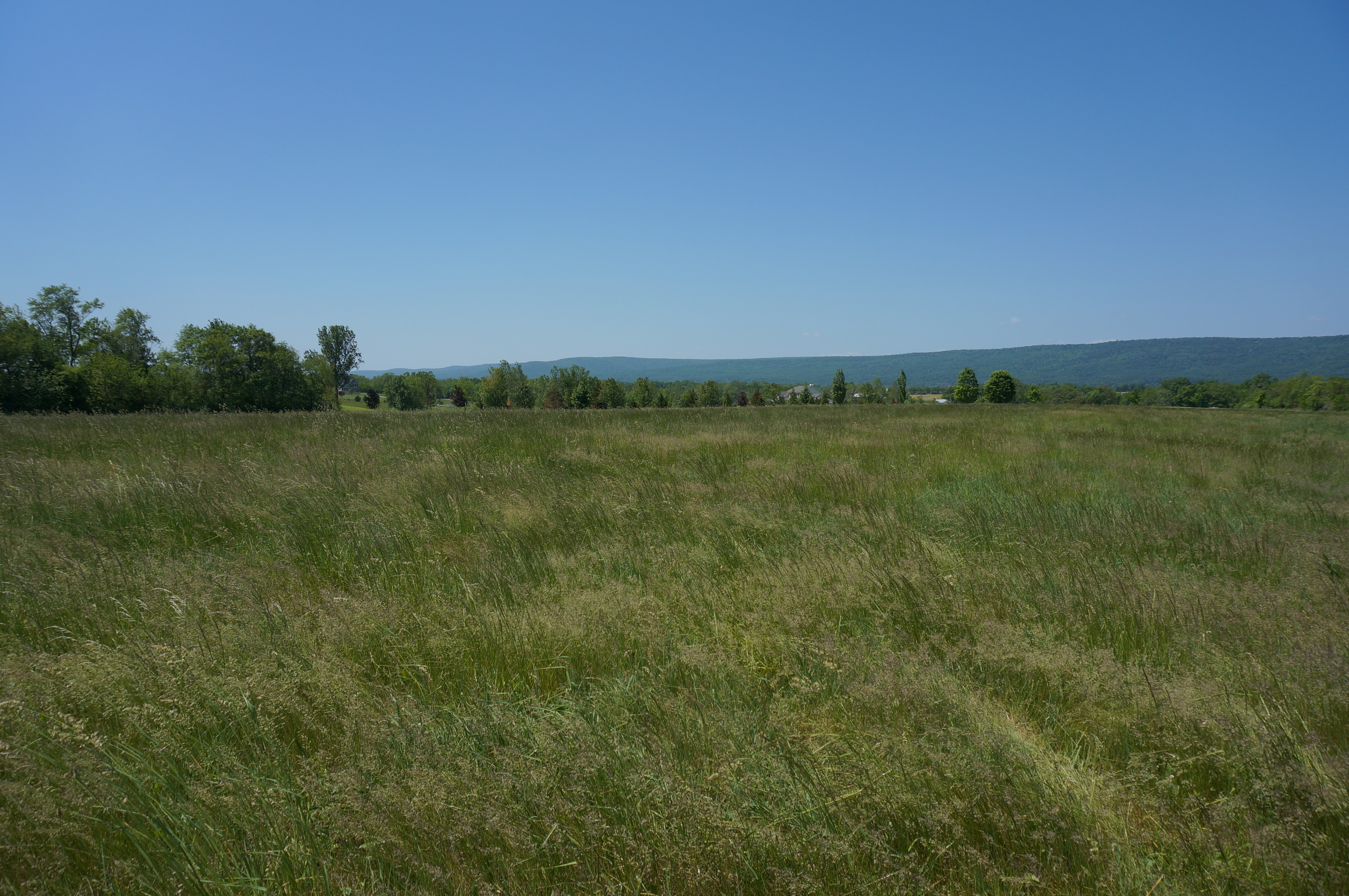 The view from Potomac Sprout's headquarters, west lies the Catoctin mountain range .