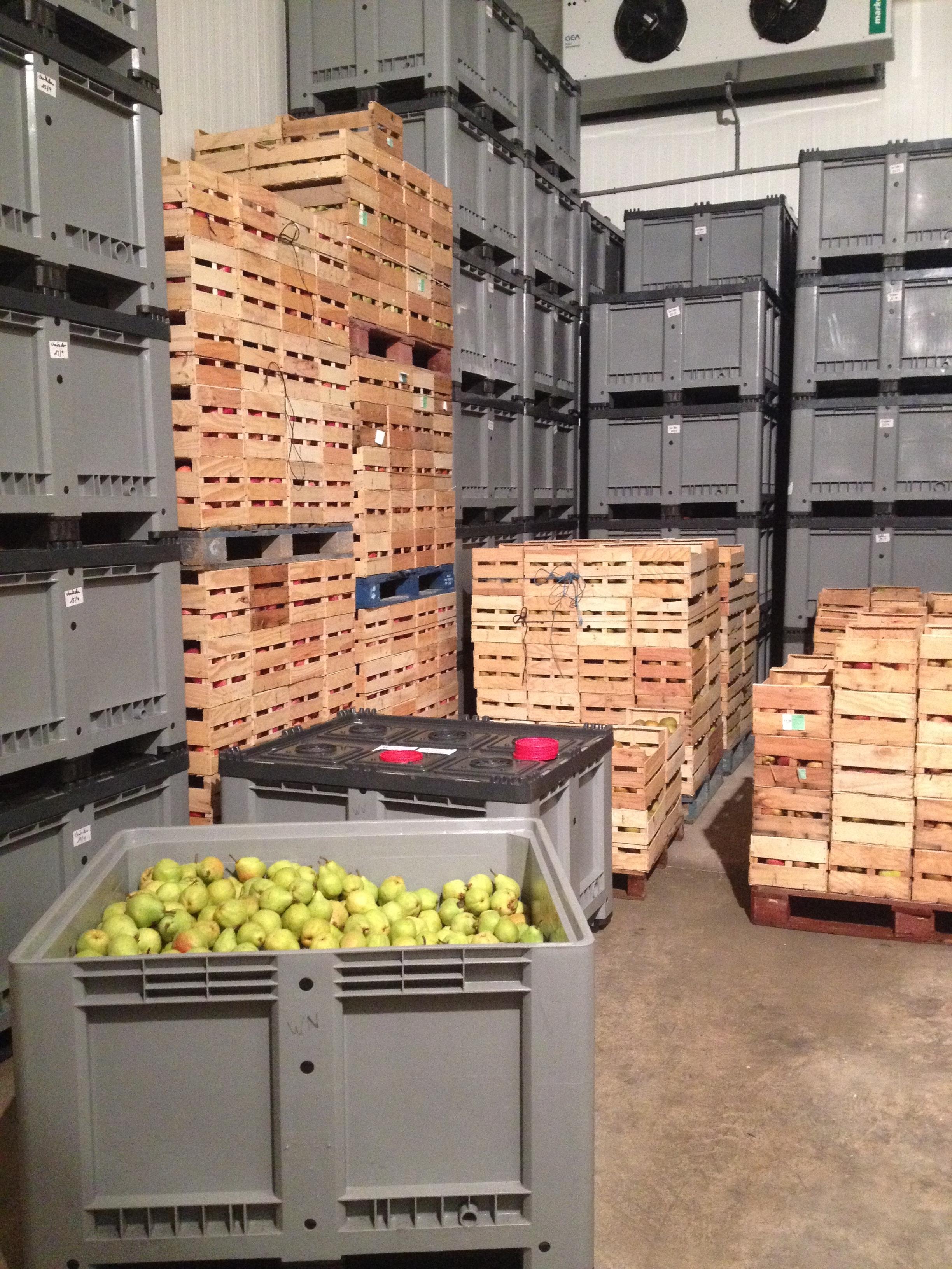 JMT US_pears storage.JPG