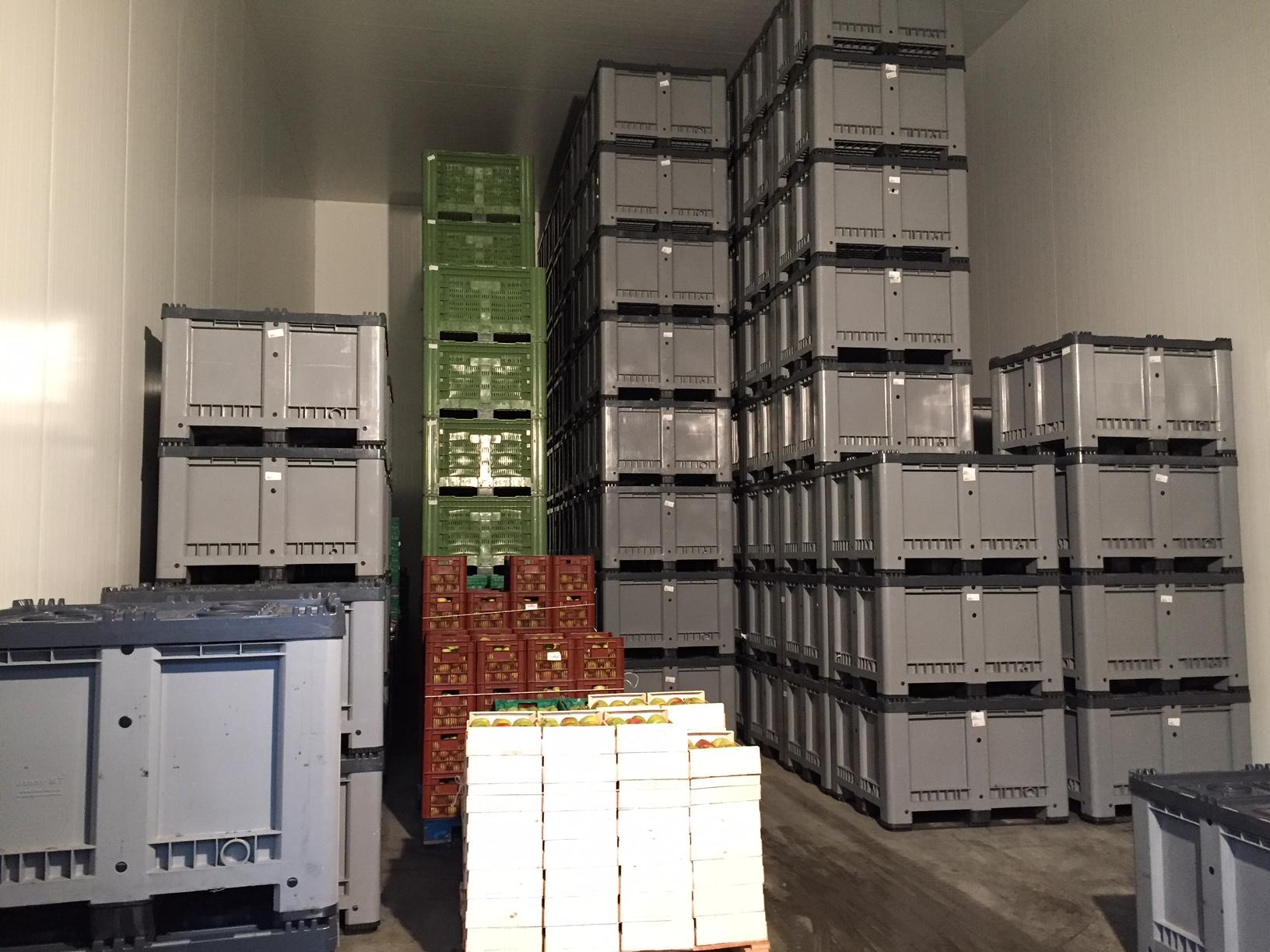 JMT US_CA pear preservation.JPG