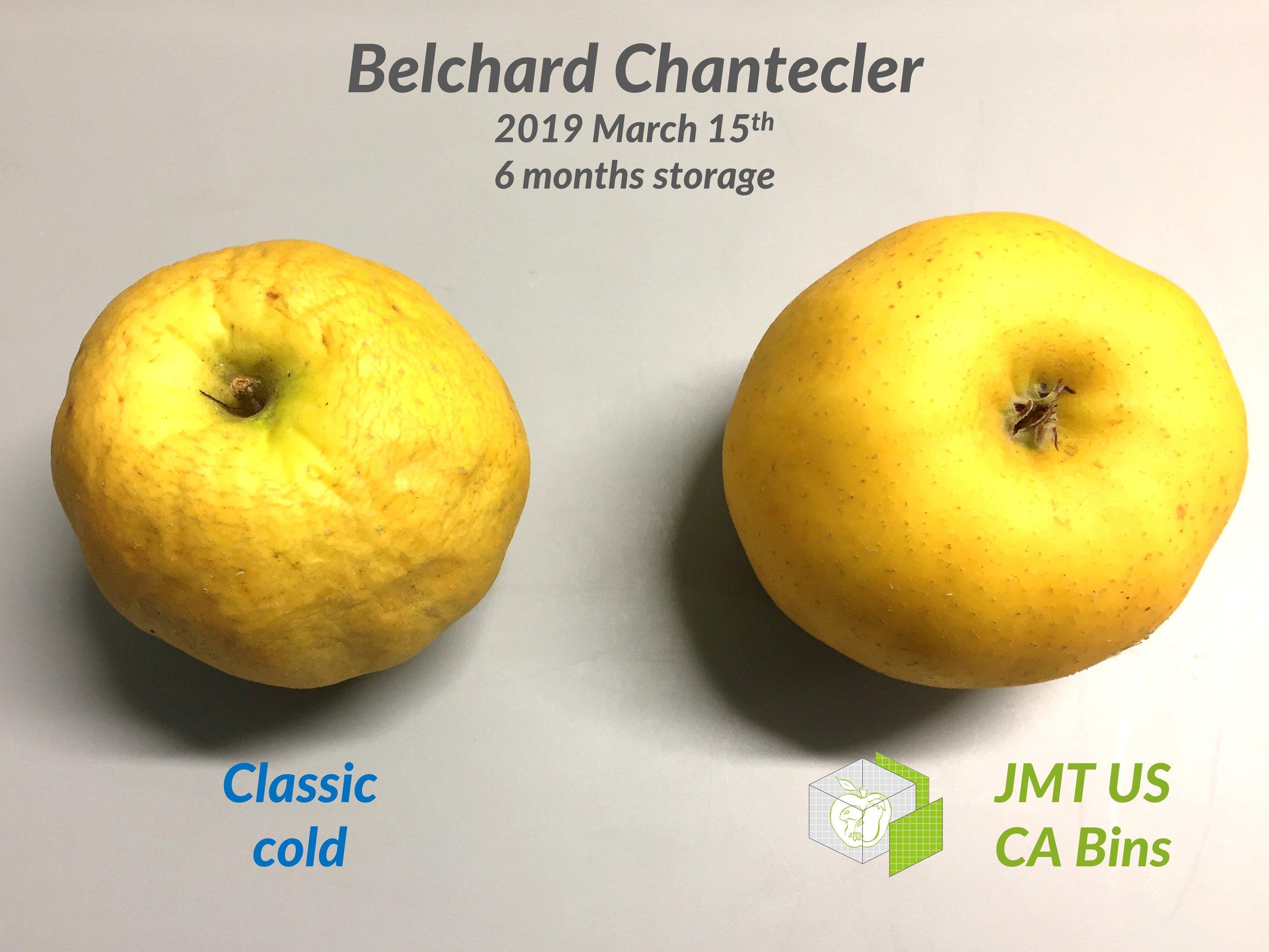 JMT US_Belchard apple_6 months.JPG