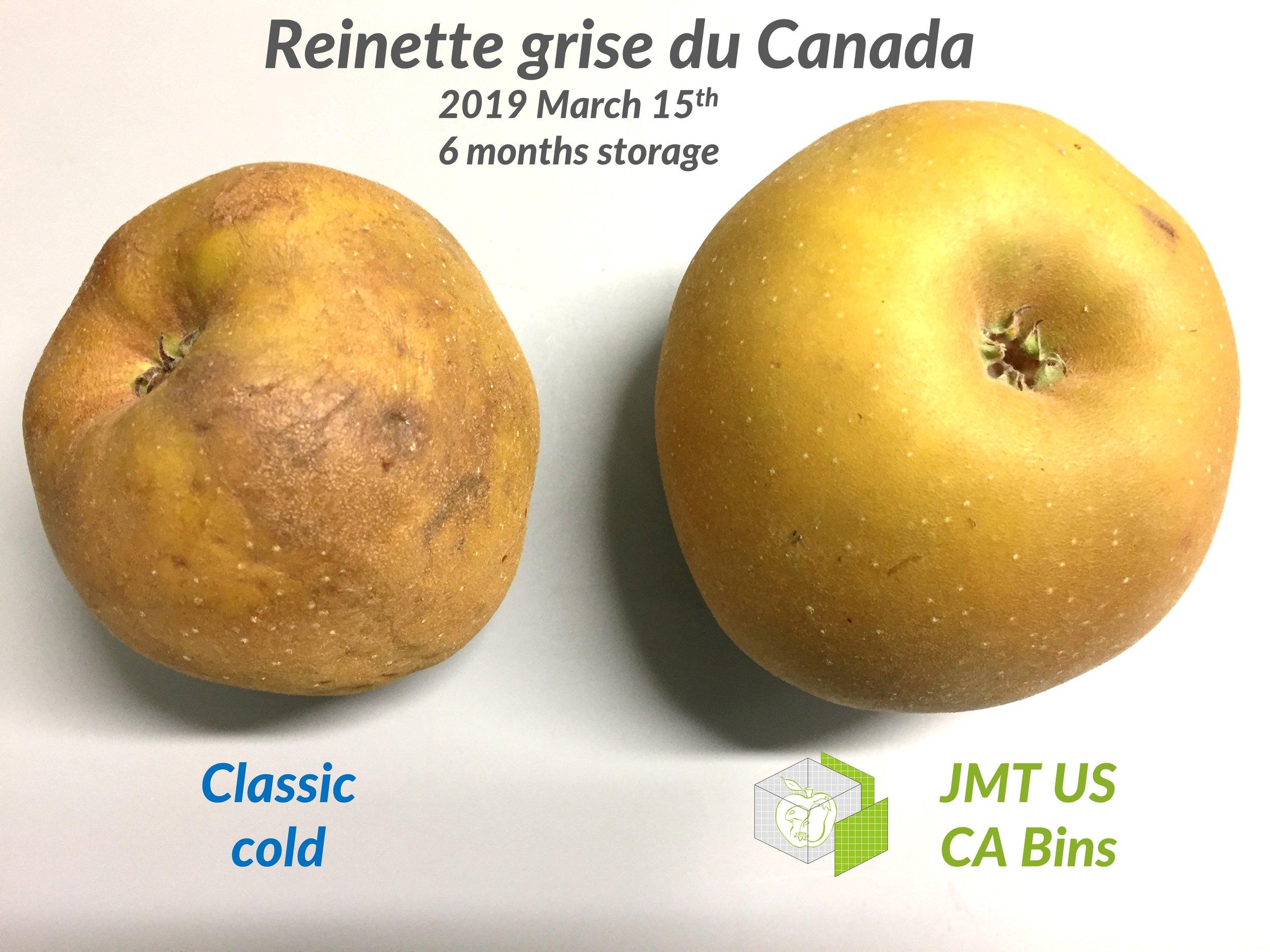 JMT US_Reinette apple_6 months.JPG