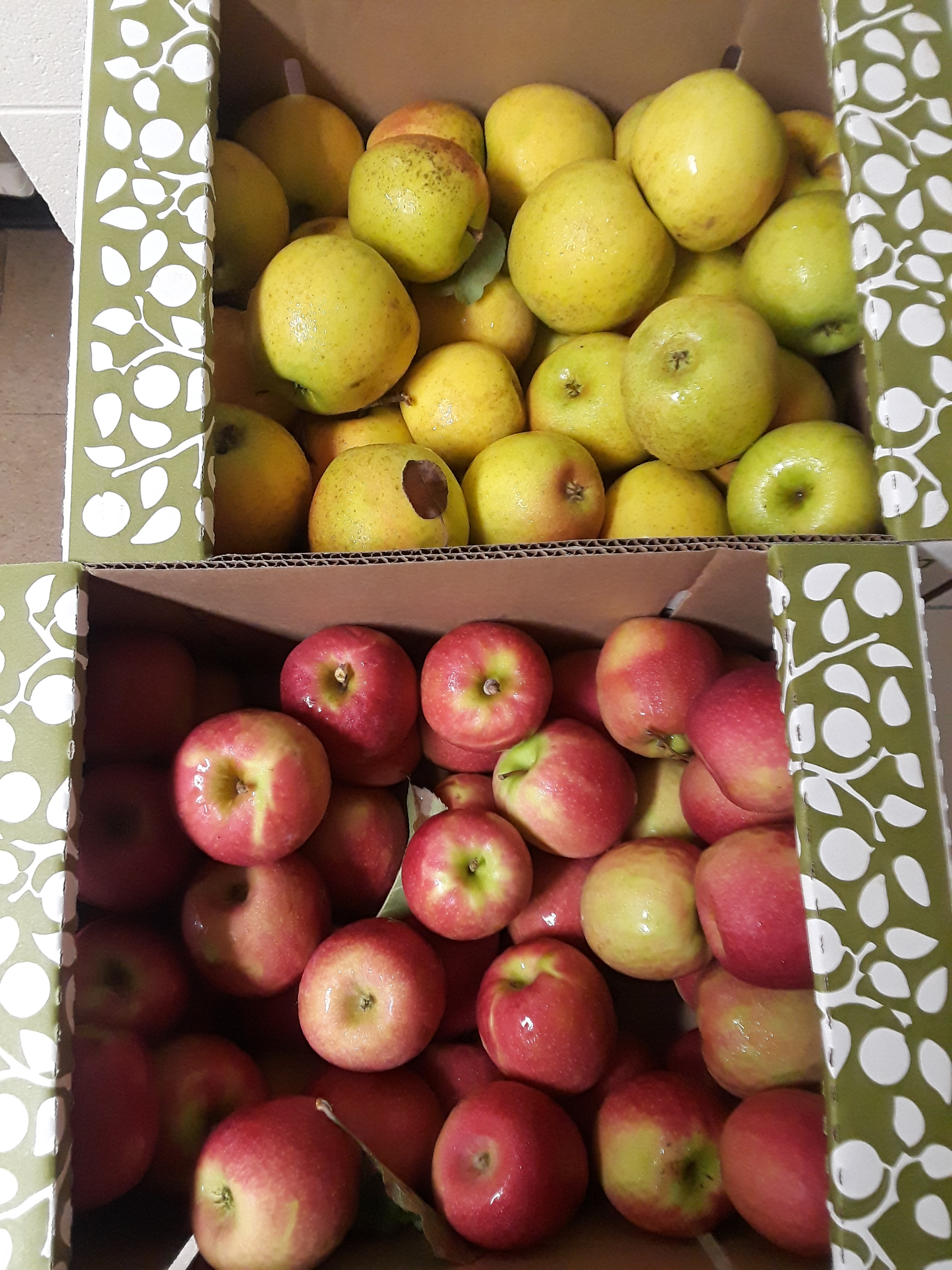 JMT US_4_PA Apples_CA storage.jpg