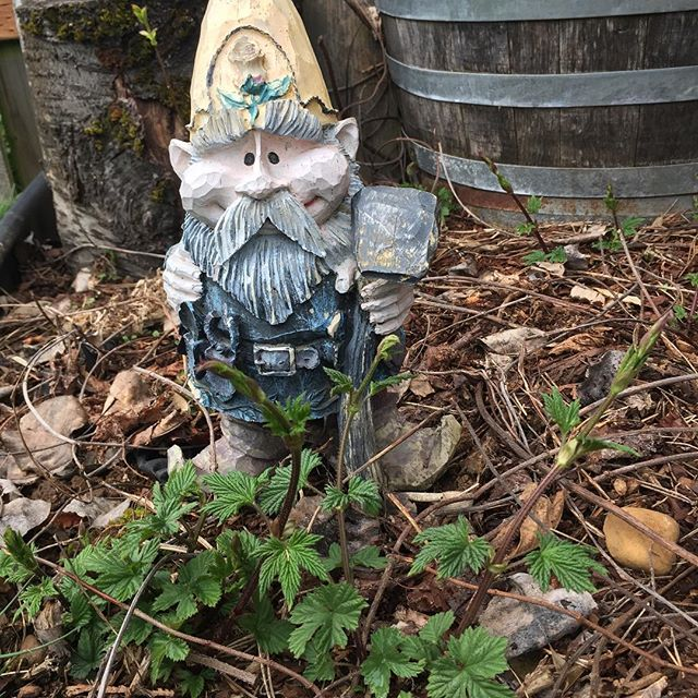 The Hop Gnome- tending to the crop.