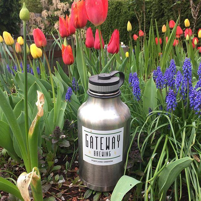 Spring flowers and growlers of Gateway Pilsner #keeponhandtruckin #flowersandgrowlers #gateway #gatewaybrewingpdx #gatewaybrewing
