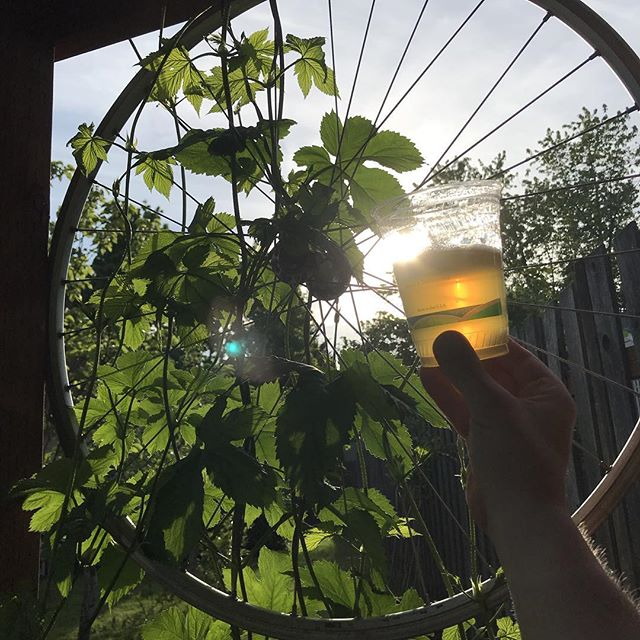 """Enjoying a nice evening with a @gatewaybrewingpdx Pilsner after a long day at the """"office"""""""