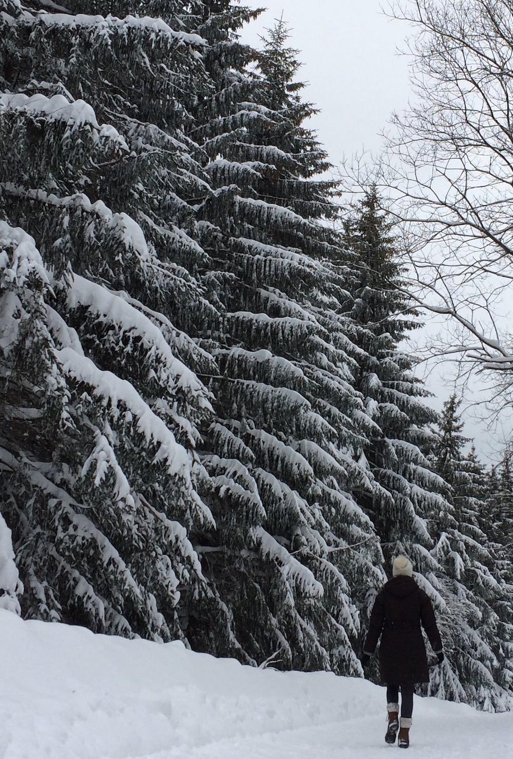 winter wonderland in the Harz mountains germany.jpg
