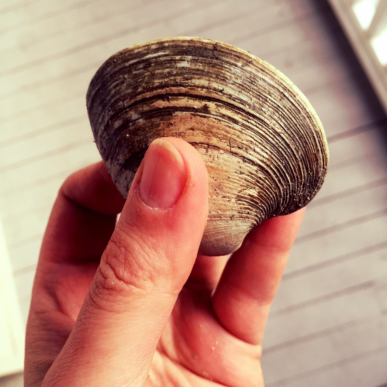 clamhand.jpg