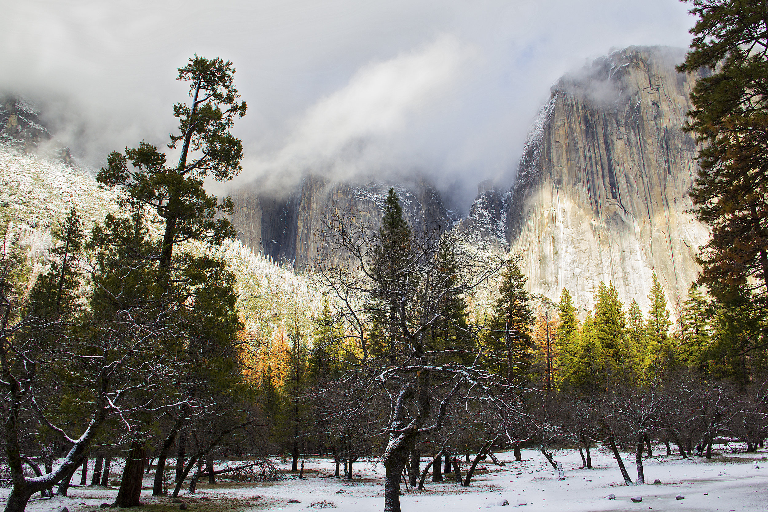 Yosemite trees.jpg