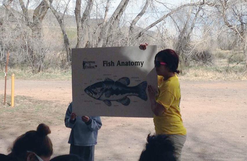 Sotelo fish anatomy