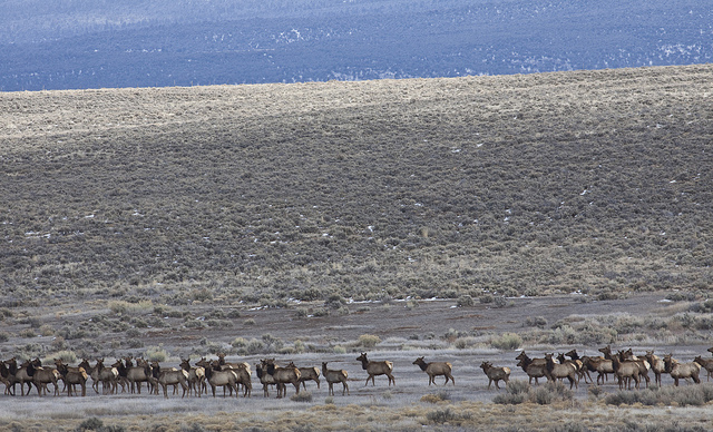 Elk range, northern New Mexico.  BLM Photo