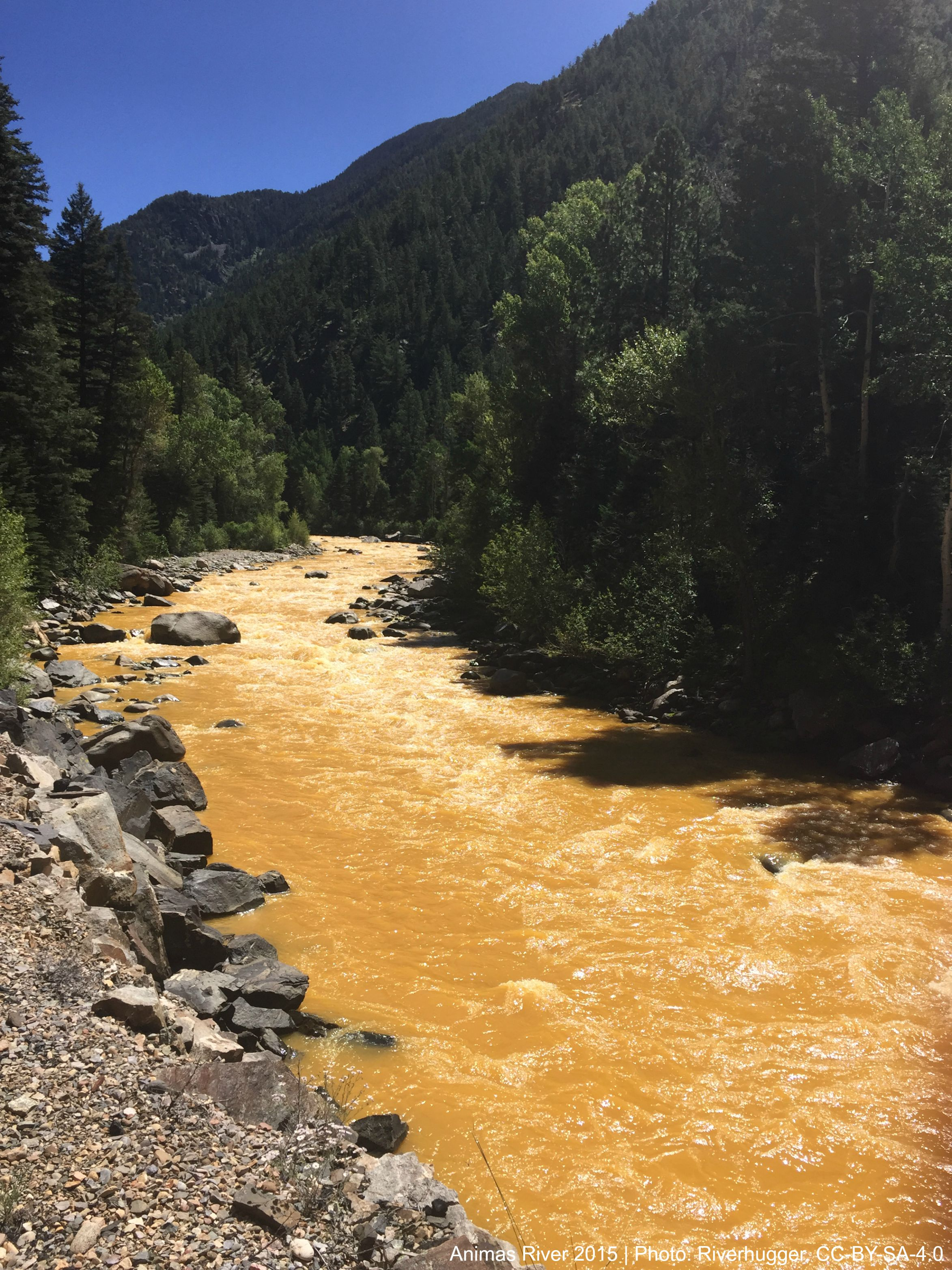 The Animas River between Silverton and Durango in Colorado, USA, within 24 hours of the 2015 Gold King Mine waste water spill.   Photo By RiverHugger,  CC BY-SA 4.0