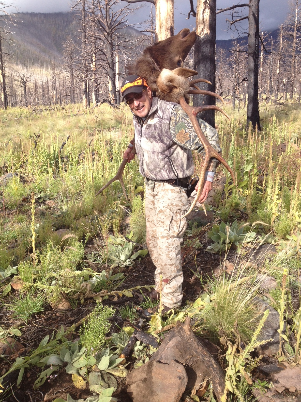 Martin Anaya packing a fine mature bull elk out of the Schultz Burn (2014), near the same location as 2006 photos.