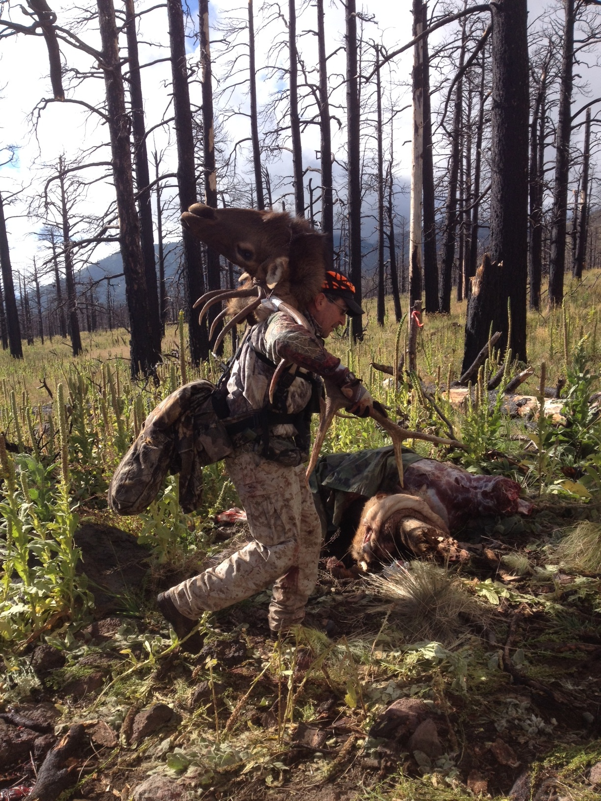 Another shot of Martin Anaya packing bull elk out of the Schultz Burn (2014), near the same location as 2006 photos.