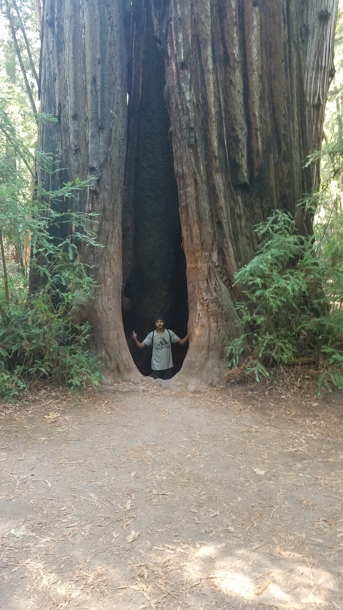 Edward Gutierrez standing inside a Giant Sequoia Tree in Armstrong Redwoods State Nature Reserve | October 2018