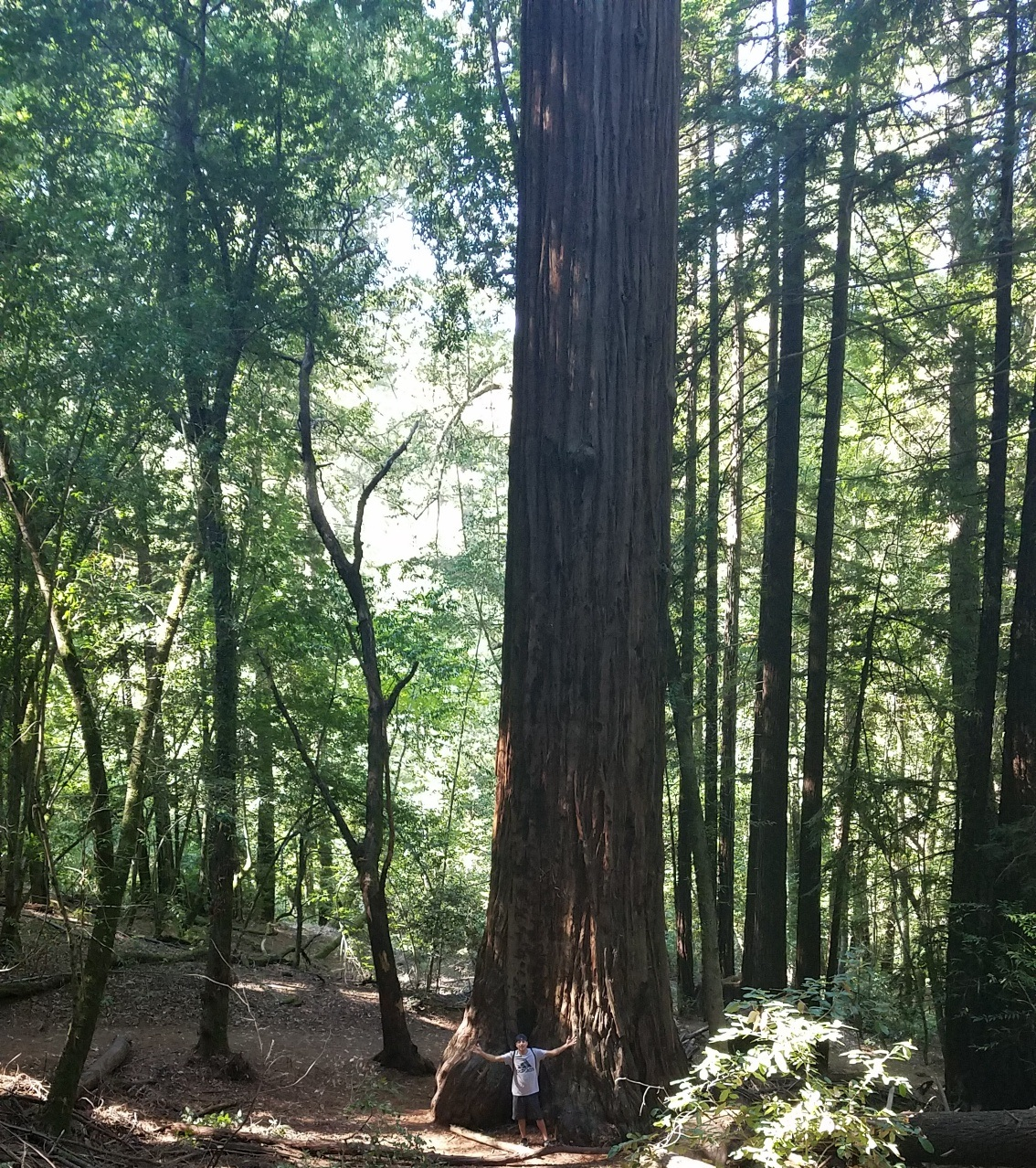 Edward Gutierrez standing at the base of a Giant Sequoia Tree in Armstrong Redwoods State Nature Reserve | October 2018