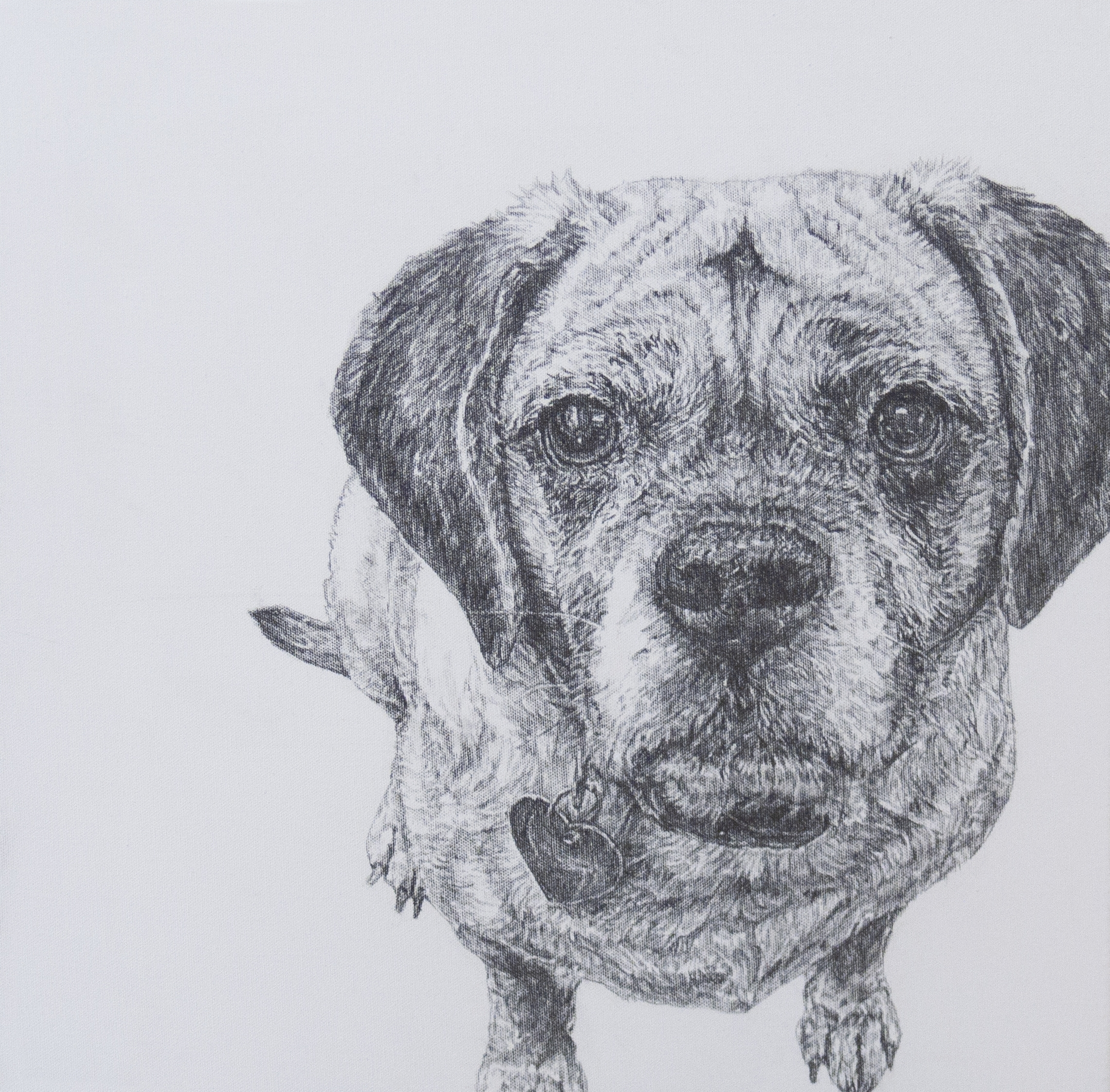"""""""Bailey - Study for Painting""""  Graphite on Canvas  20 x 20  NA"""