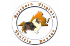 northern virginia sheltie rescue.jpg
