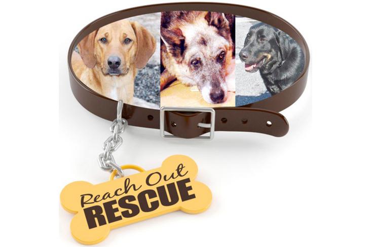 Reach-Out-Rescue_LOGO.jpg