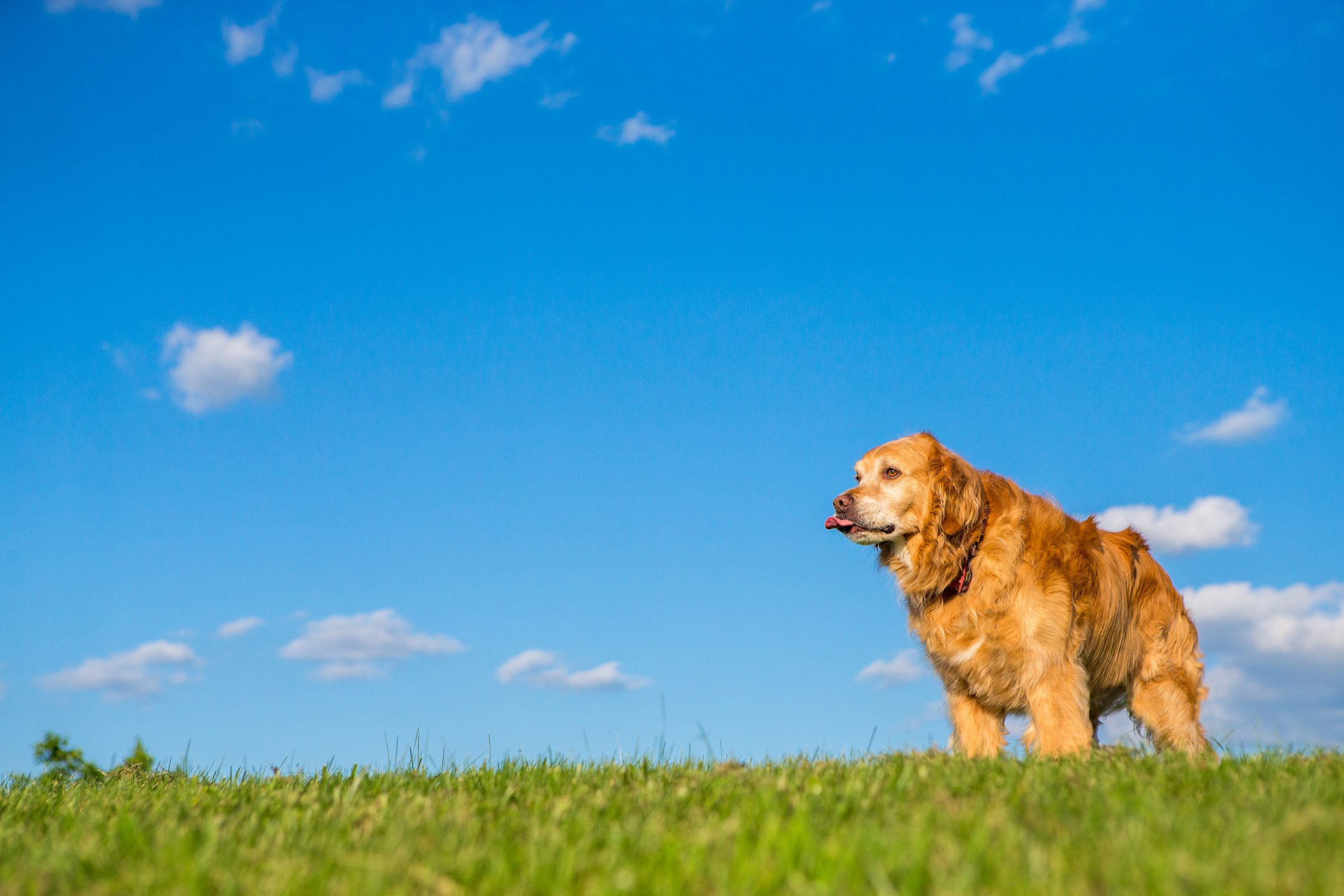 washington-dc-dog-photographer.jpg