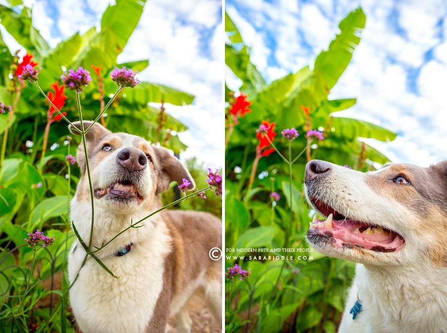 hawaii pet photography