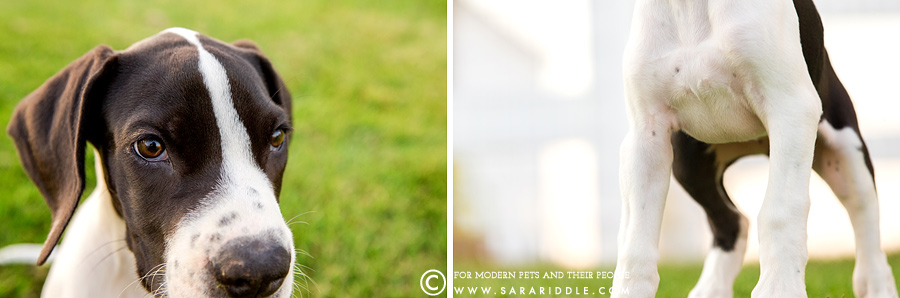 loudoun county pet photographer