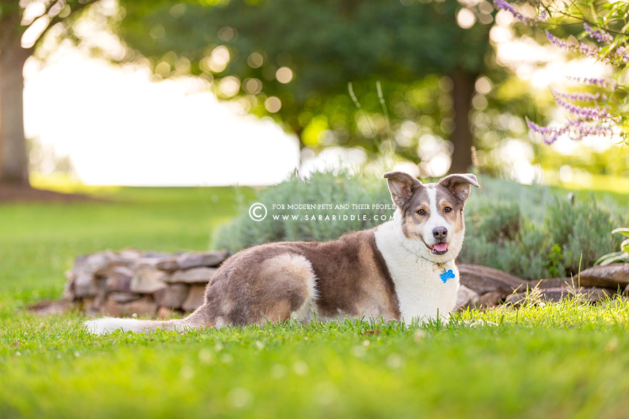 dc pet photographer