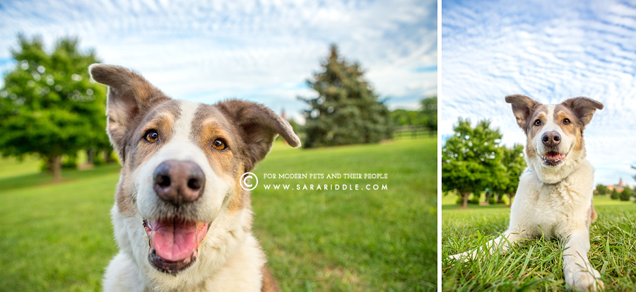 dc pet portraits