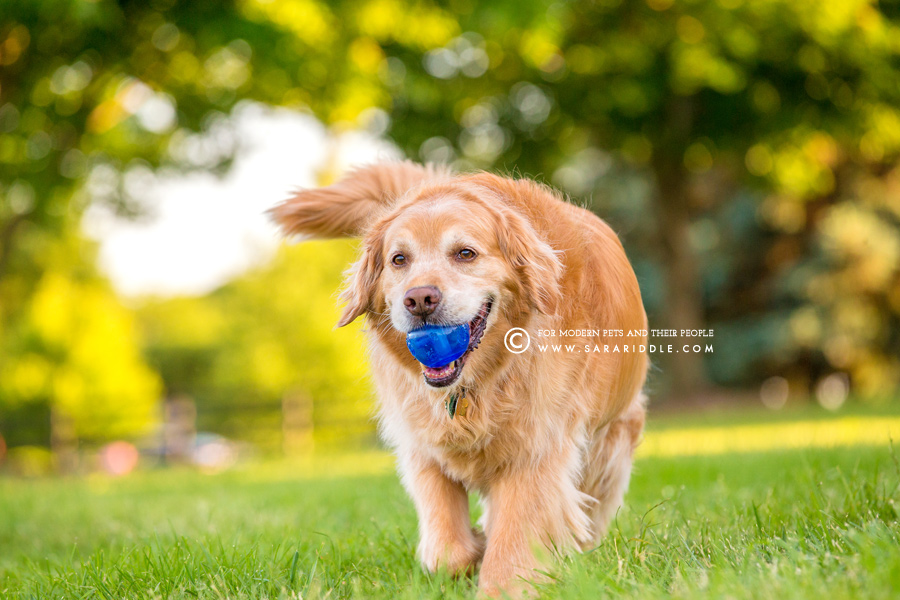 best va pet photographer