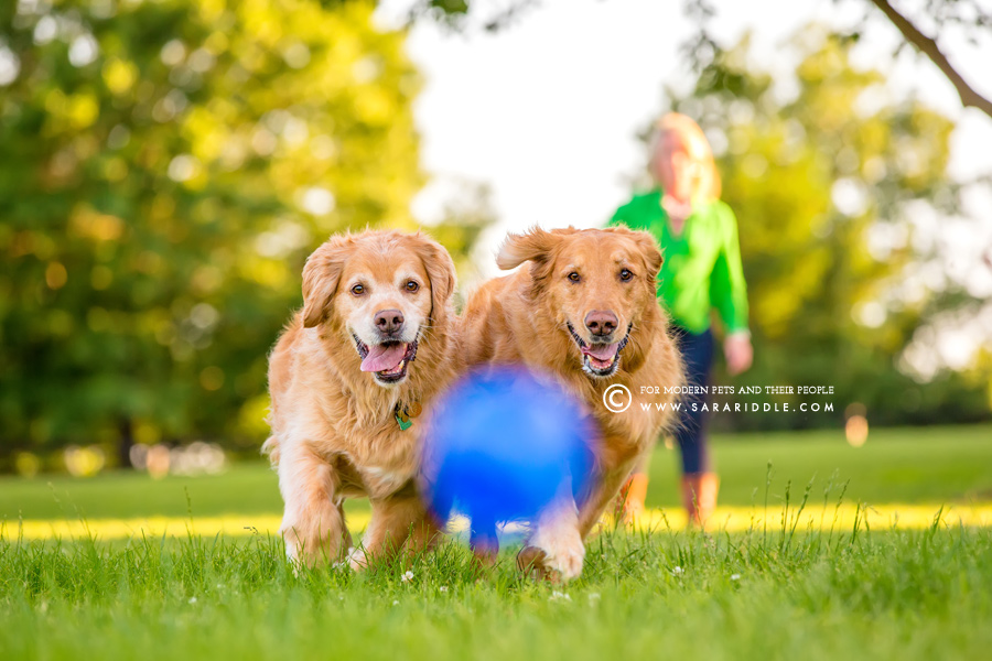 va commercial pet photographer