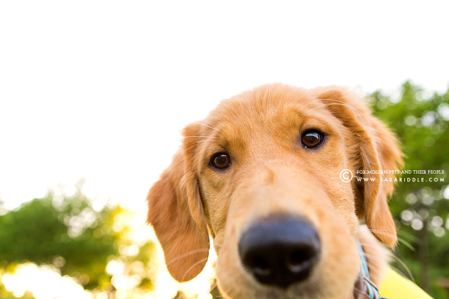 leesburg pet photographer