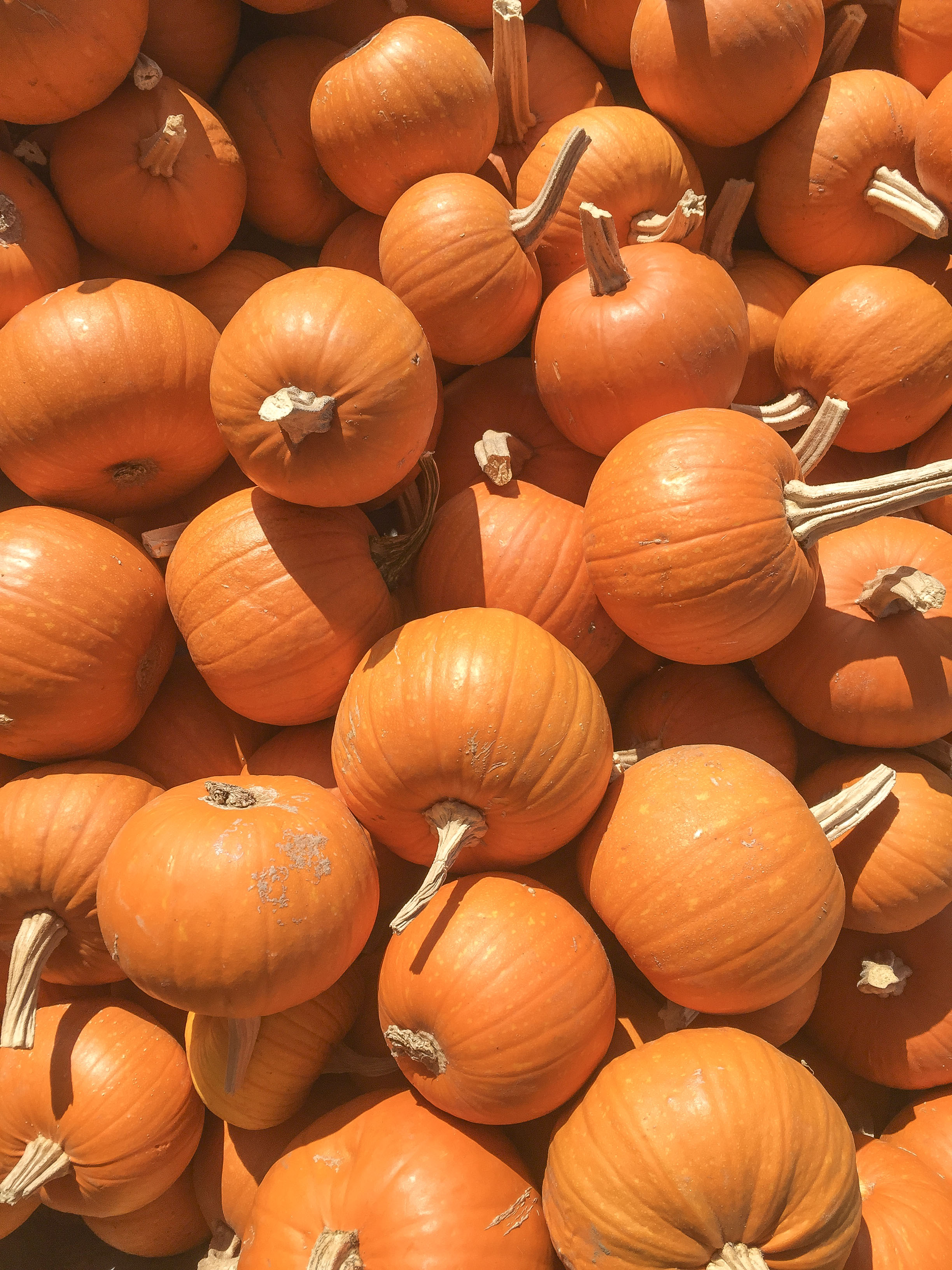 Los_Angeles_Pumpkin_Patch_7